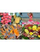 boutique des produits de la Réunion, colis reunion letchis, fleurs, fruits exotiques