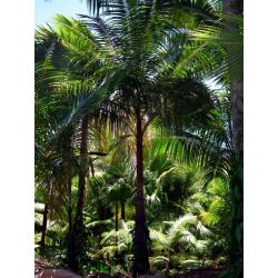 Colis Palmiste Sud Reunion...