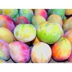 Colis Mangue Réunion 5.5 kg...