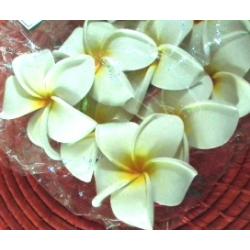Fleur frangipanier...
