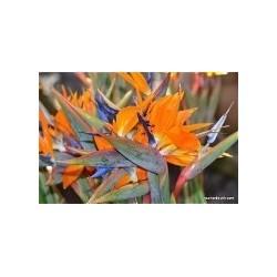 Colis fleurs exotiques...
