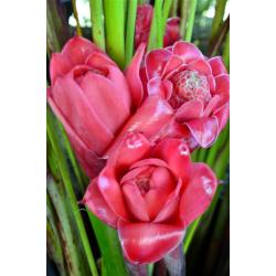 Colis fleurs exotiques de...