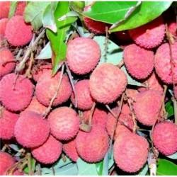 Colis Fruits Réunion et...